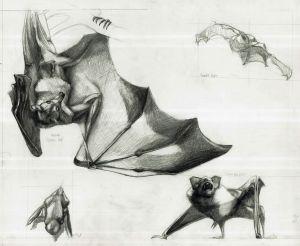 Scientific Illustrations and Studies